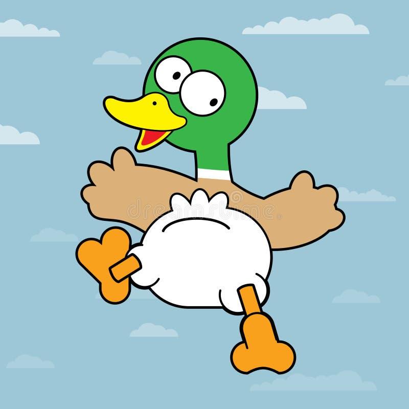 Mallard Duck stock illustration