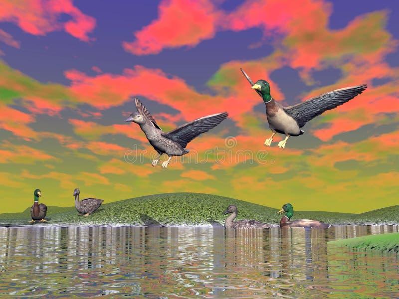 Mallard duck scenery - 3D render royalty free illustration