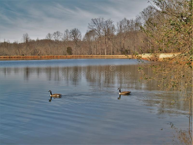 Mallard Lake at Tanglewood Park. Mallard Lake is one of two small lakes at Tanglewood Park in Clemmons, North Carolina stock images
