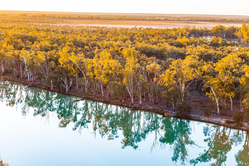 Mallee eucalyptuses reflecting in calm water. Mallee eucalyptuses reflecting in calm water of Murray River at sunset. Riverland, South Australia stock photography