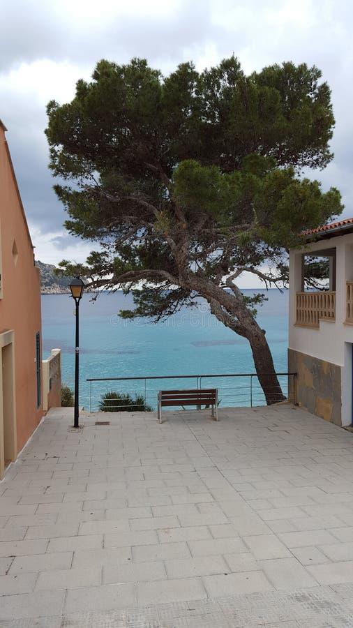 Mallorca härligt träd royaltyfri foto