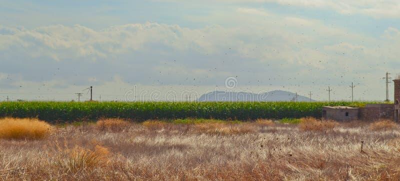 Mallorca rurale immagine stock