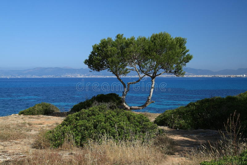 On Mallorca royalty free stock photo