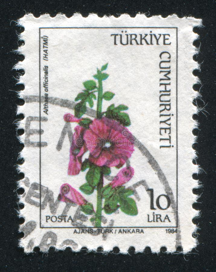 Mallow. TURKEY- CIRCA 1984: stamp printed by Turkey, shows mallow, circa 1984 stock images