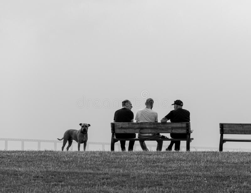Malmö, Sweden - September 1, 2019: Three male friends sits on a bench having a discussion while looking out of the ocean and the. Öresund bridge. Their dog royalty free stock photography