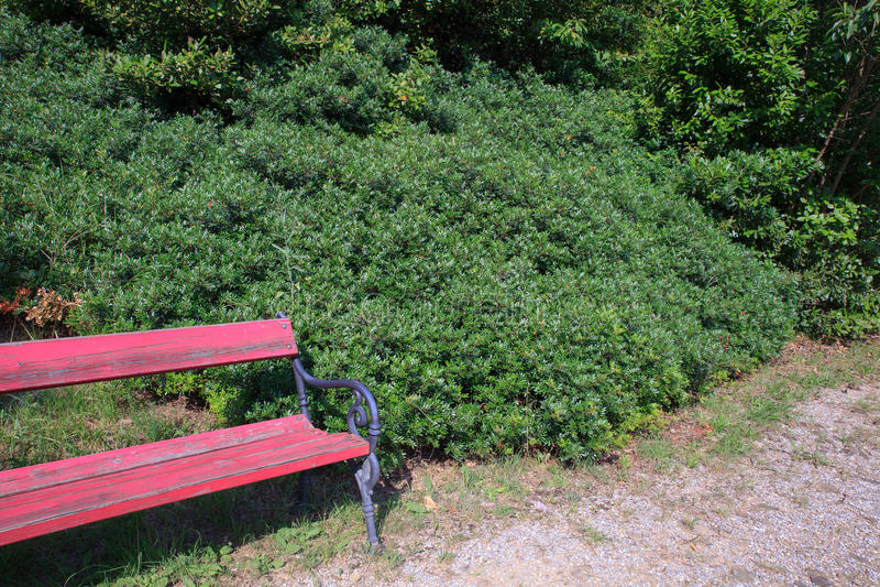 Malosma, género de planta imágenes de archivo libres de regalías