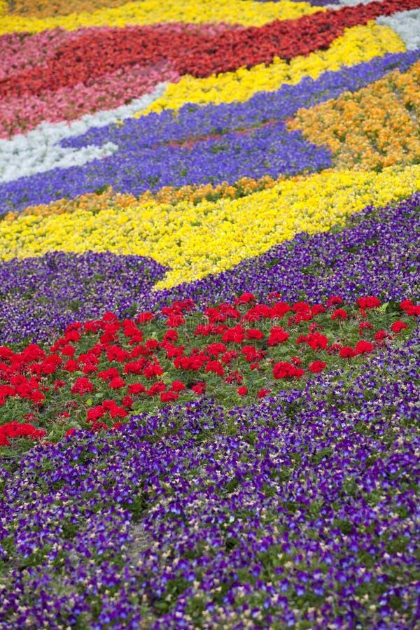 Malować z kwiatami zdjęcie royalty free