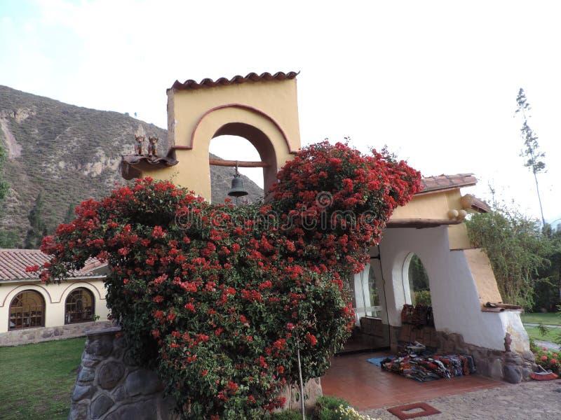 Malownicza ściana i róże w Peru zdjęcia royalty free