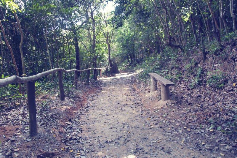 Malownicza droga, biega przez terenu górzystego w dżungli Wietnam Z tonowaniem zdjęcie royalty free