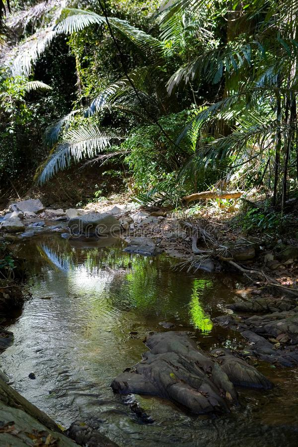 Malowniczy egzota krajobraz z halną rzeką w jungu zdjęcie royalty free