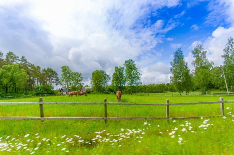 Malowniczy krajobraz w Kristianstad, Szwecja fotografia stock