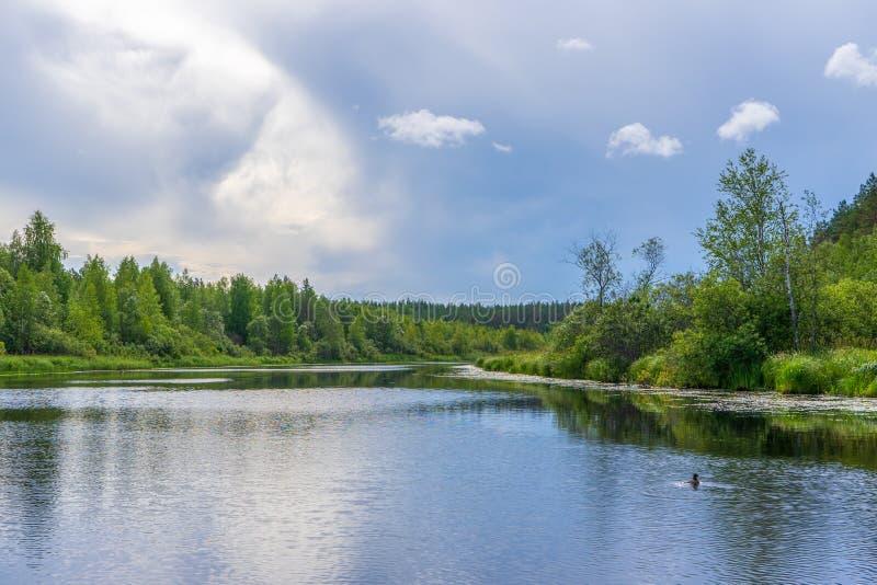 Malowniczy lato krajobraz z północną rzeką i lasem w lato chmurnym dniu Podróżujący odległych miejsca i odkrywający zdjęcie stock