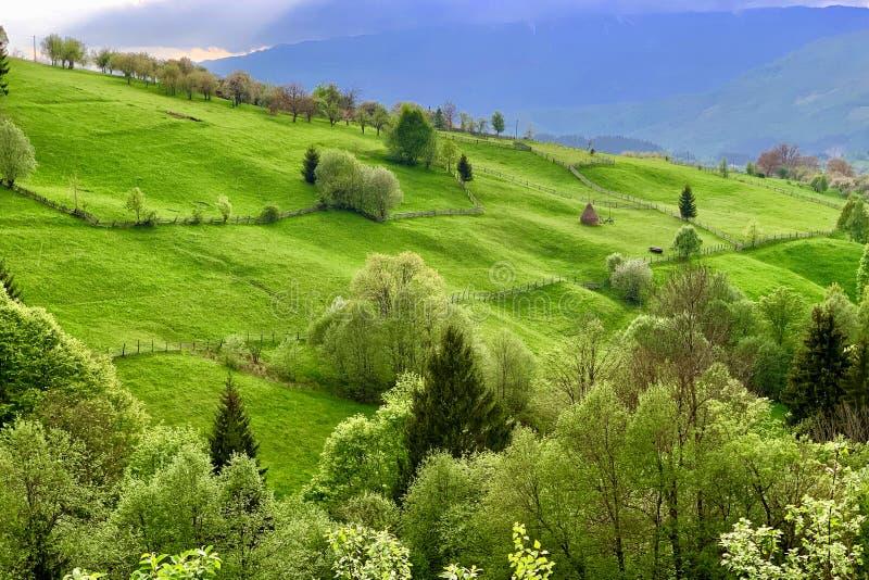 Malowniczy naturalny krajobraz zielonej trawy łąki zdjęcie royalty free
