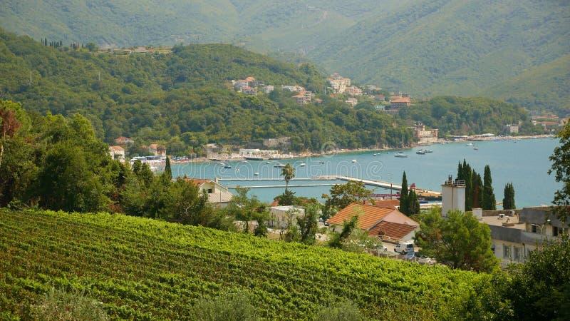 Malowniczy widok winnica Herceg Novi fotografia royalty free