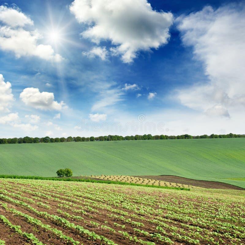 Malowniczy wiejski krajobraz z zielonym wiosny polem zaświecał zdjęcia royalty free