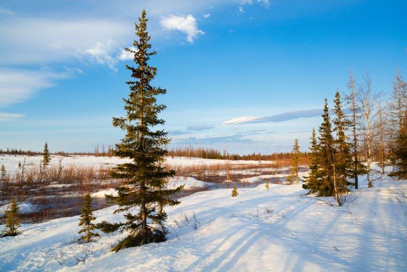 Malowniczy wiosna krajobraz z rzeka lodem topił nagich drzew piękne chmury w niebieskim niebie obrazy stock