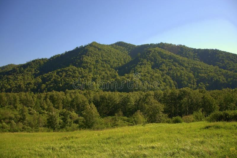Malowniczy wzgórza zakrywający z iglastym lasem i paśnikiem przy stopą Altai, Syberia, Rosja Krajobraz fotografia stock