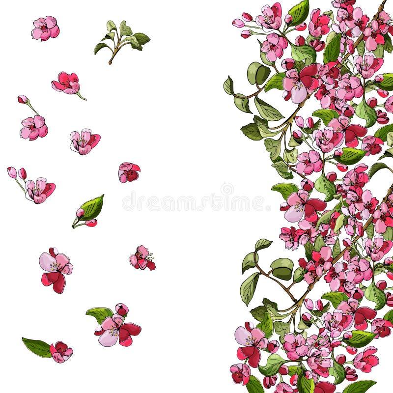 Malplaatje of achtergrond van tot bloei komende roze tak van appelboom en bloemen Hand getrokken gekleurde schets van malusbloeme vector illustratie