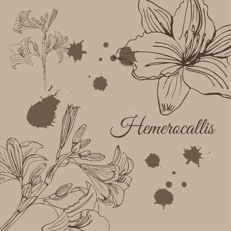 Malplaatje met schets van hemerocallisbloemen en abstracte vlekken Hand getrokken inktschets op sepia achtergrond Retro stijl vector illustratie