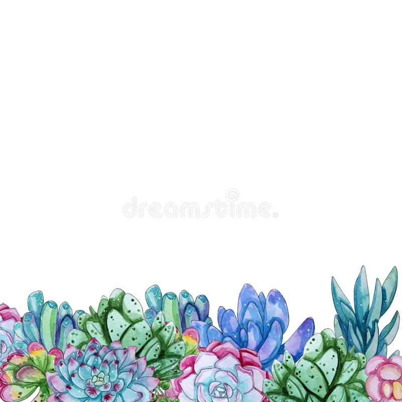 Malplaatje van waterverf het succulente die bloemen op witte achtergrond wordt geïsoleerd stock illustratie