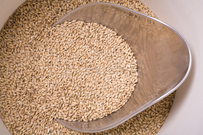 Download Malt in Bucket stock image. Image of alcohol, brewery - 9334005