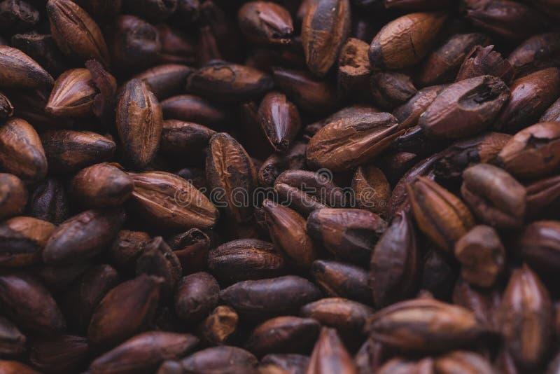 Malt de chocolat dans un sac Brassage de bière de métier de l'orge mA de grain photographie stock