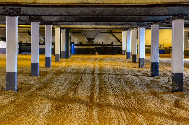 Malta de la cebada en el piso en la destilería, Escocia el malteado fotos de archivo libres de regalías