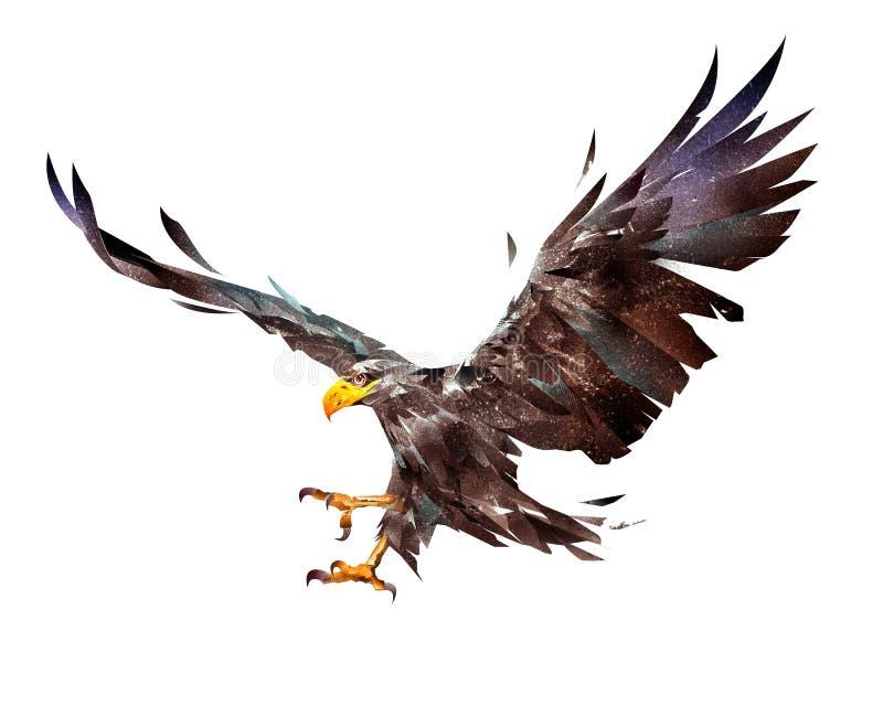 Malte einen Fliegenadler auf einem weißen Hintergrund stock abbildung