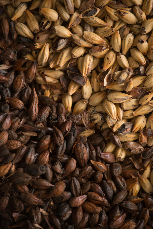 Download Malted Barley stock image. Image of malted, crystal, grains - 28367407