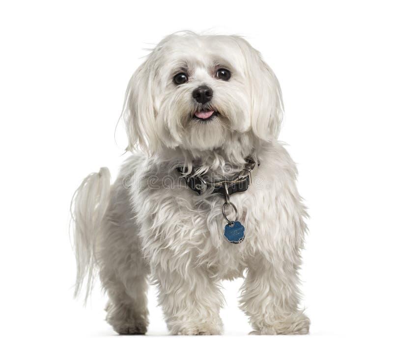 È vero che un anno per un cane equivale a 7 per un uomo ...