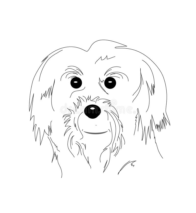 Download Maltese dog stock illustration. Image of front, cartoon - 28721322