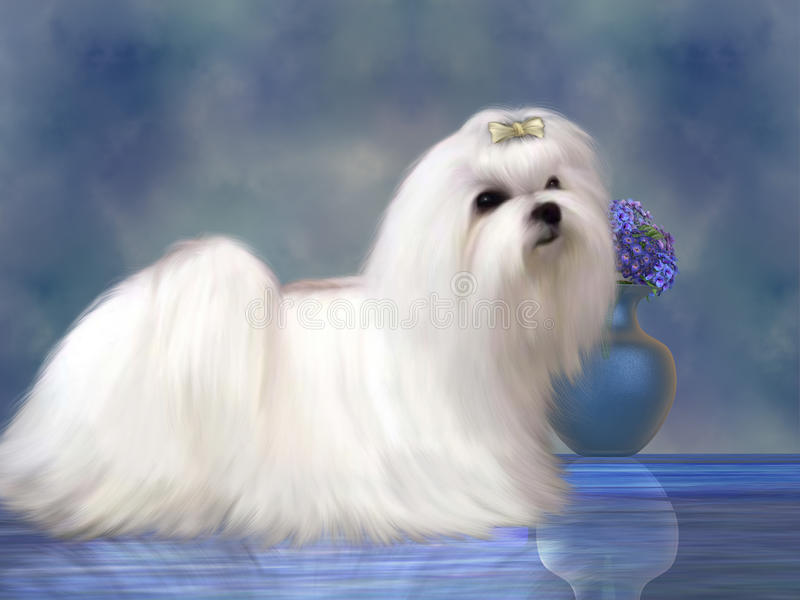 Maltese Dog stock illustration