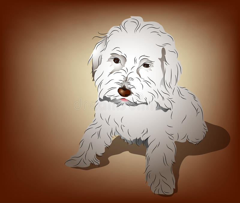 Maltese Poodle Mixed Puppy royalty free illustration