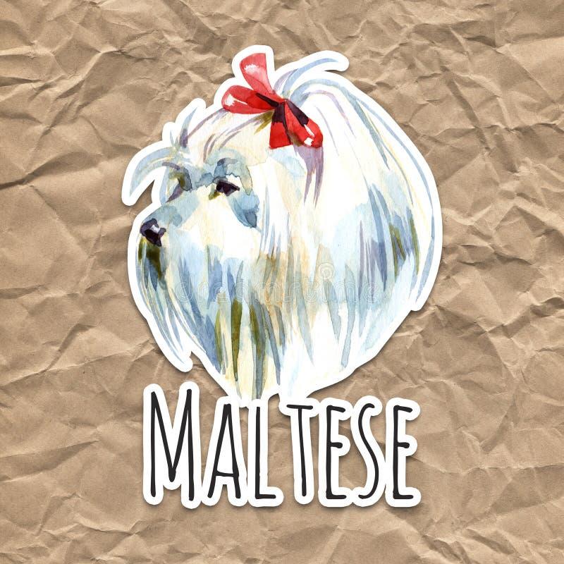 Maltesischer Pudel-Hund Der Bewohner von Bolognese Spielzeug oder Miniaturpudel auf Aquarellhintergrund Netter Welpe mit der Flie stockfotografie