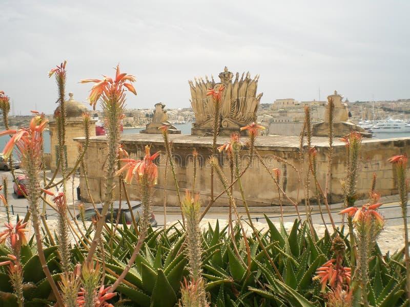 Maltesiska byggnader och härliga blommor arkivfoto