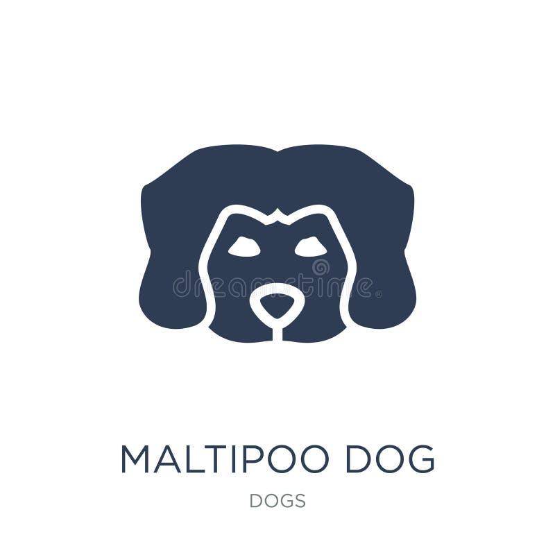 Maltipoo psa ikona Modna płaska wektorowa Maltipoo psa ikona na bielu royalty ilustracja