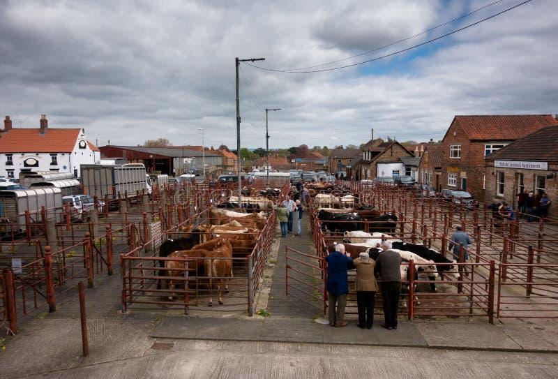 Malton boskapmarknad - de utvändiga nötkreaturpennorna arkivfoto