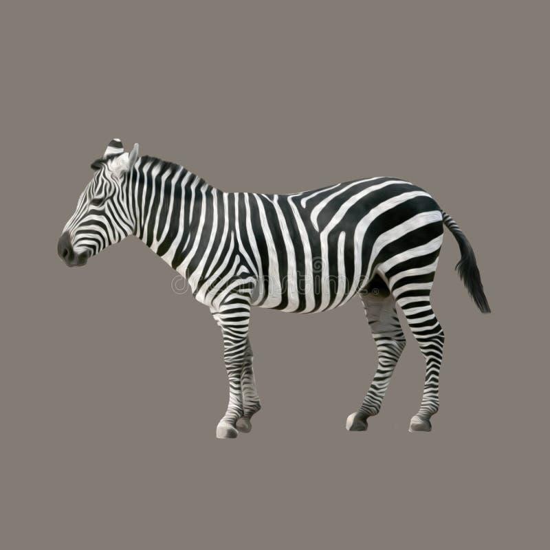 Malująca zebra obraz stock