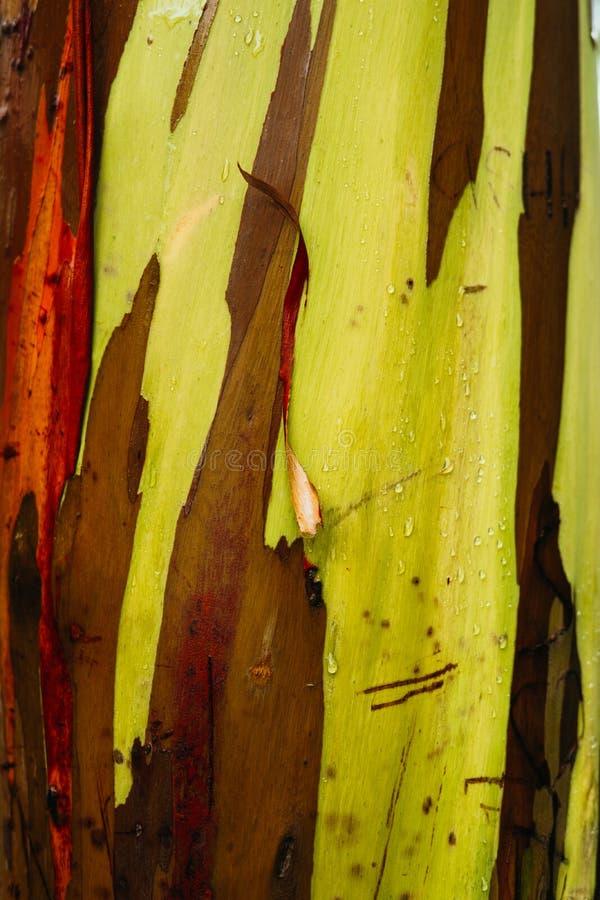 Malujący drzewa sen zdjęcie stock