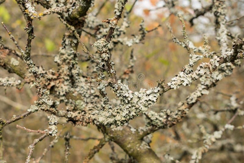 Malujący jesień motywy fotografia stock