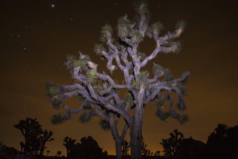Malujący Joshua drzewo obrazy royalty free