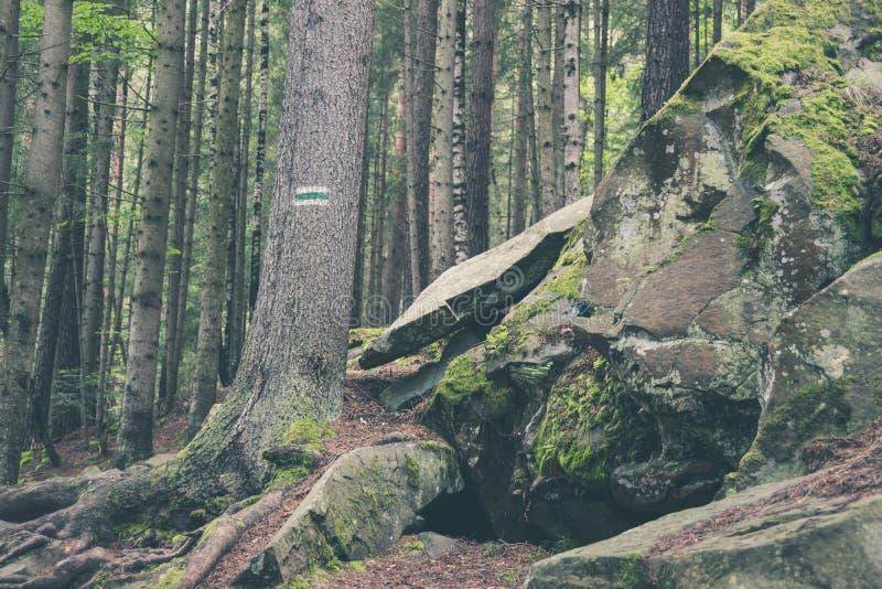 Malujący szyldowy na drzewnym bagażniku w lasowej wycieczkuje ścieżce obraz royalty free