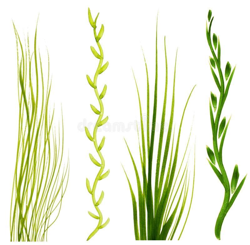 Malujący w guasz zielonej trawy elementach na białym tle ilustracja wektor