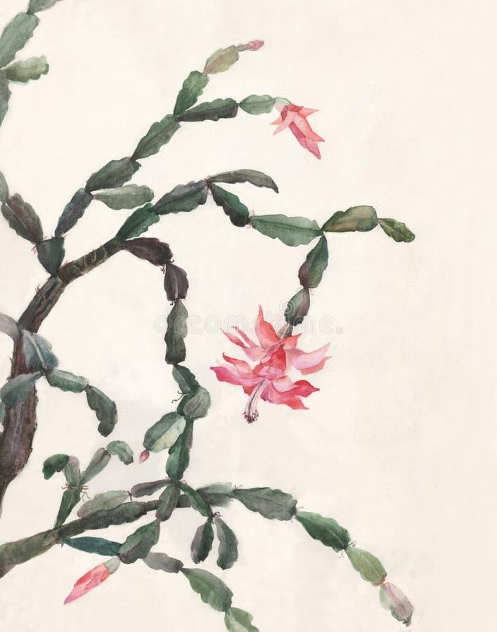 maluje schlumbergera akwarelę kwiaty ilustracja wektor