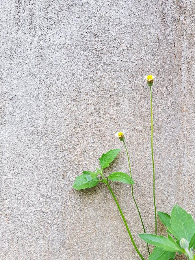 Malutcy kwiaty na betonowy †‹wall†‹ obraz royalty free