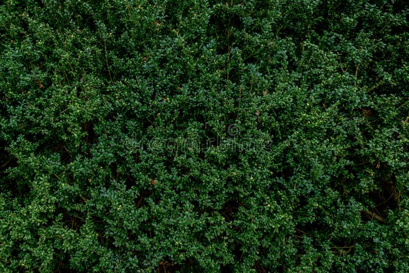 Malutka zieleń leafs tło zdjęcie stock