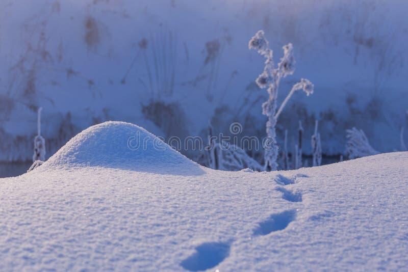 Malutki śnieżny wzgórek z małym dzikim zwierzęciem tropi blisko z selekcyjną ostrością i plamą przy światłem dziennym zdjęcia stock
