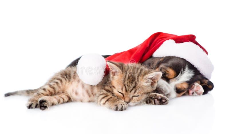 Malutki figlarki i baseta ogara szczeniak w czerwonym Santa kapeluszowym sypialnym tog zdjęcia stock