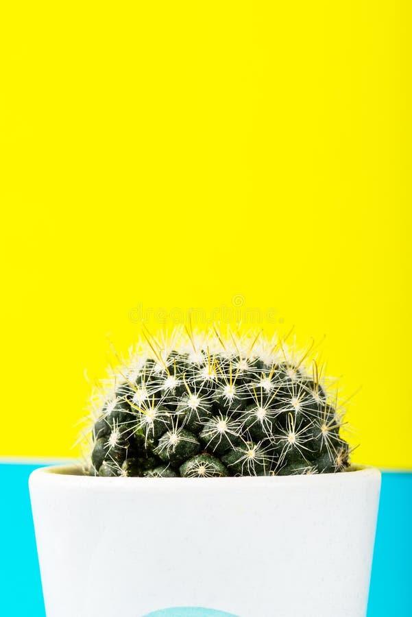 Malutki kaktus w garnku na Jaskrawym Neonowym tle Naszły Imago zdjęcie royalty free