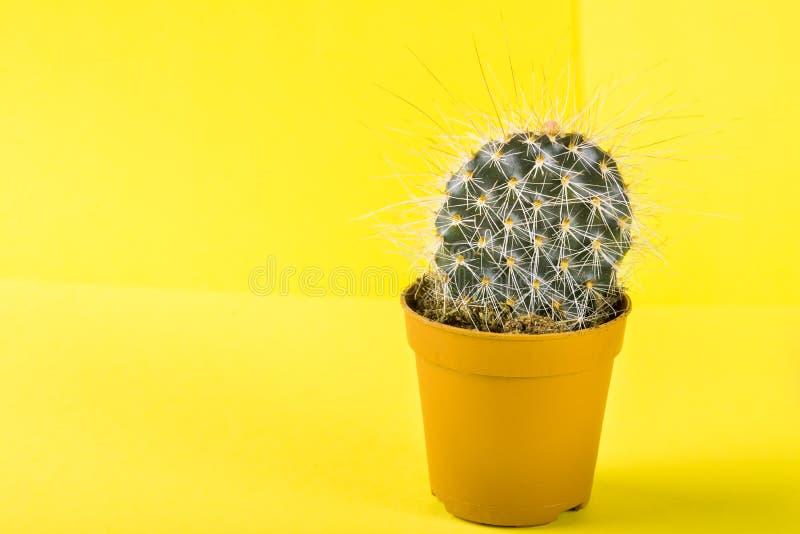 Malutki kaktus w garnku na Jaskrawym Neonowym tle Naszły Imago obrazy royalty free